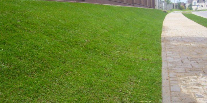 газон 2